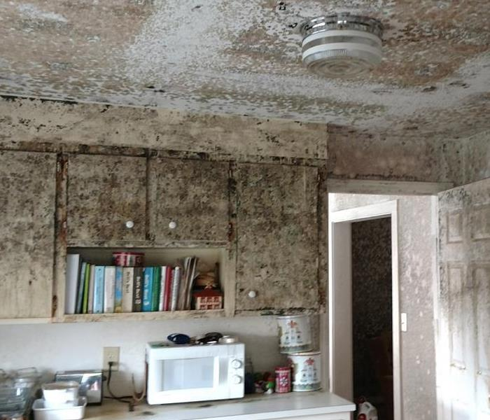 Mold in Unoccupied Home