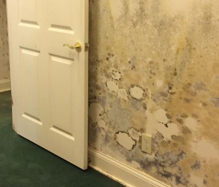 Mold Remediation Damage from Mold Colonies is Minimized by SERVPRO Remedy